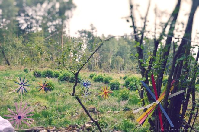 champs des fleurs 2